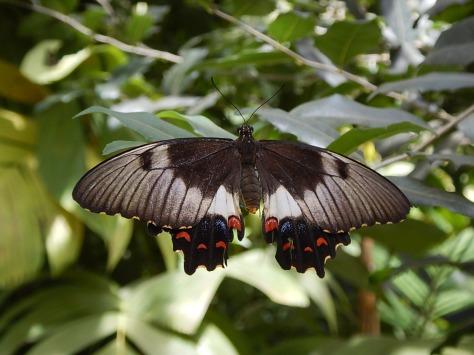 Butterfly shot in Australia