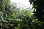 Tropical Biome