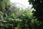 Tropical Biome